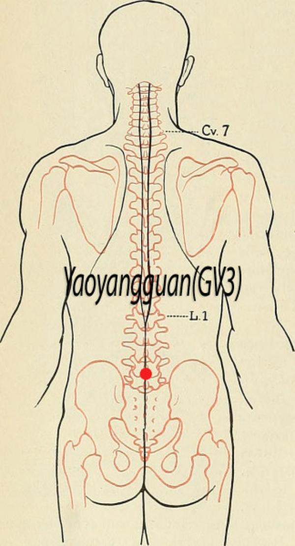 Point d'acupuncture Yaoyangguan GV4