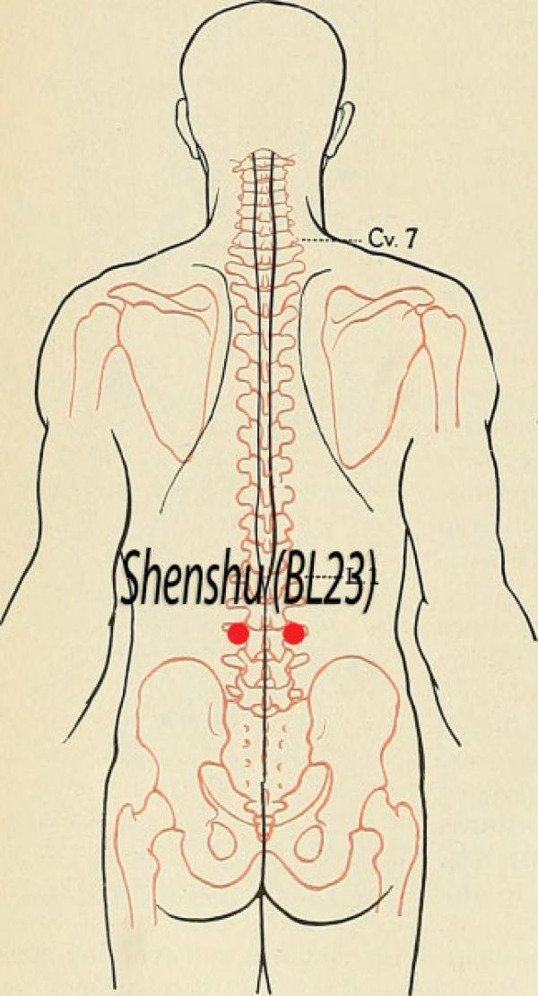 Point d'acupuncture Shenshu BL23