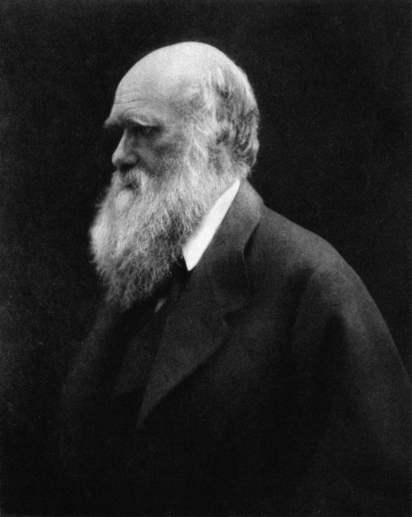Contrairement à Marx et Freud, Darwin lui-même reste considéré à la fois comme un penseur très original et comme un chercheur attentif (son étude des fossiles de balanes reste un exemple pour les paléontologues). (Image : Wikimedia / Julia Margaret Cameron / Domaine public)