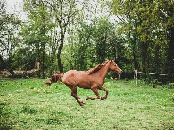 Un vieillard perd son cheval à la frontière, mais n'est-ce pas un mal pour un bien ? (Image :BioPic Photos/Pixabay)