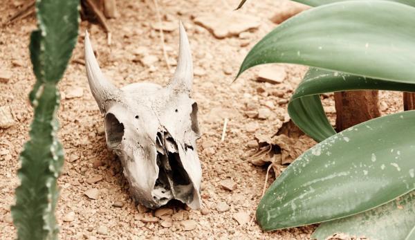 Les animaux n'auront pas accès à de l'eau salubre une fois les rivières polluées. (Image : Pixabay)