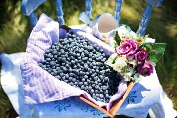 L'anthocyanine est le pigment végétal qui donne aux fruits et légumes bleus/violets leur couleur distinctive. Il a également une grande valeur nutritionnelle pour le corps humain. (Image: Jill Welington / Pixabay)