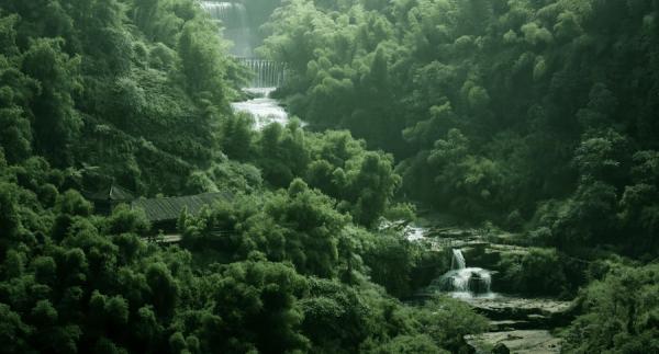 Forêt de bambou ShuNan à Yibin, Sichuan. (Image : Capture d'écran / YouTube)
