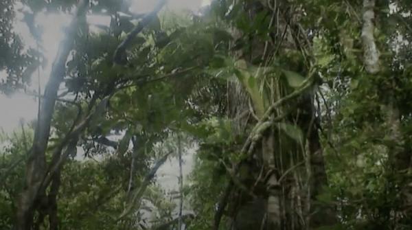 Jiangling primitif à Hainan. (Image : Capture d'écran / YouTube)