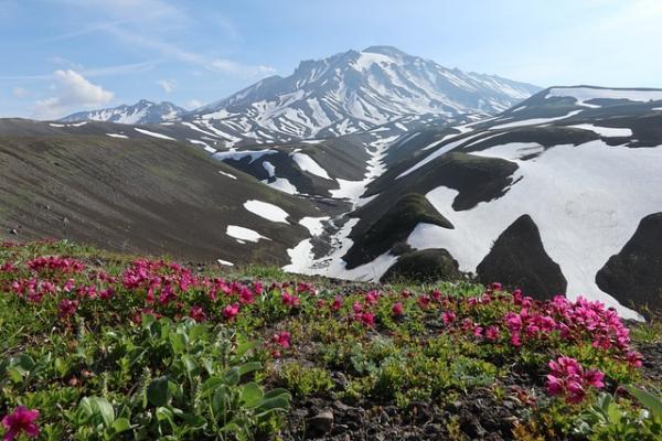 Les azalées tapissent les montagnes. (Image : 该图片由 / Наталья Коллегова / 在 / Pixabay /上发布)