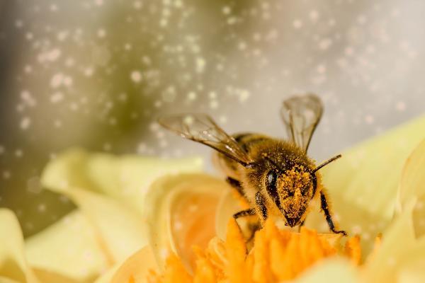 Dans la ville d'Utrecht, aux Pays-Bas, de nombreux toits d'abris bus sont recouverts de plantes. Cela a été fait pour encourager la croissance des populations d'abeilles mellifères dans la région. (Image: Myriams-Fotos / Pixabay)
