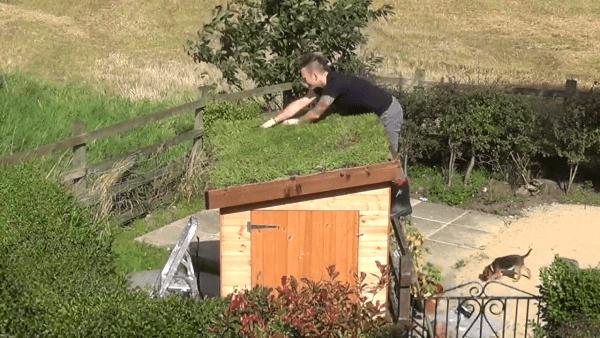 Les toits d'abris bus, respectueux de la nature sont la concrétisation de l'une des nombreuses mesures prises par les Pays-Bas pour protéger la population d'abeilles dans le pays. (Image : Capture d'écran / YouTube)