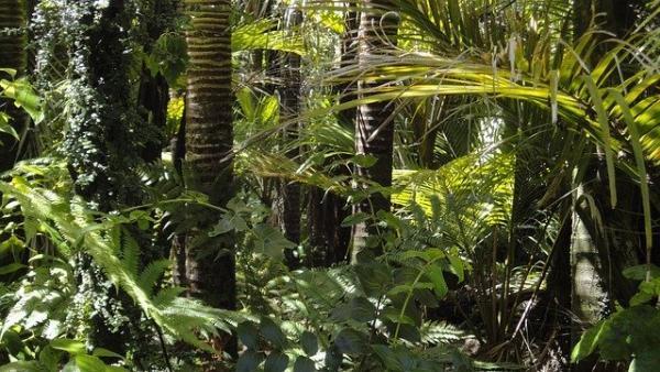 Depuis des siècles, les indigènes d'Amazonie testent les plantes pour leur utilisation à des fins médicinales. (Image: viapixabay/CC0 1.0)