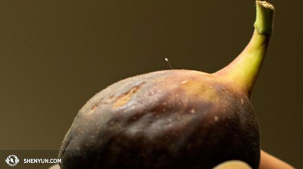 Une fleur d'Udumbara ne mesure que 4 mm (Image: ShenYun.com)