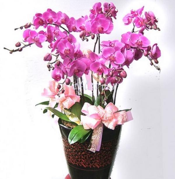 Orchidée. (Vision Times)