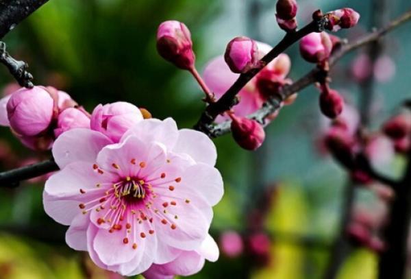 Délicates fleurs d'hiver. (Vision Times)