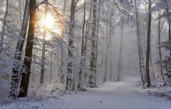 Le 1er janvier, on se promène facilement dans la nature souvent enneigée. (Image :Jörg Vieli/Pixabay)
