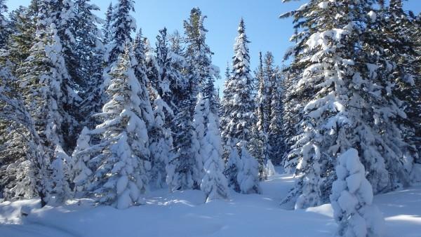 Planifiez votre voyage en Mongolie en hiver pour admirer la steppe et les régions frontalières de Sibérie couvertes de neige. (Image : pixabay/CC0 1.0)