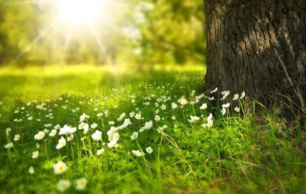 Les feuilles vertes convertissent la lumière du soleil en sucres tout en remplaçant le dioxyde de carbone dans l'air par de la vapeur d'eau, qui refroidit la surface de la Terre. (Image :pixabay/CC0 1.0)
