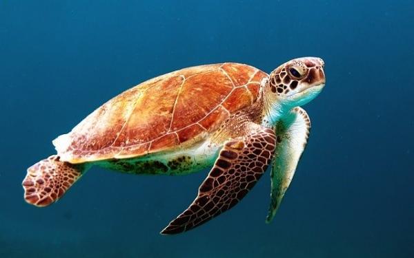 La diminution en oxygène des océans constituerait une menace pour les espèces marines et la vie sur terre. (Image : Free-Photos / Pixabay)