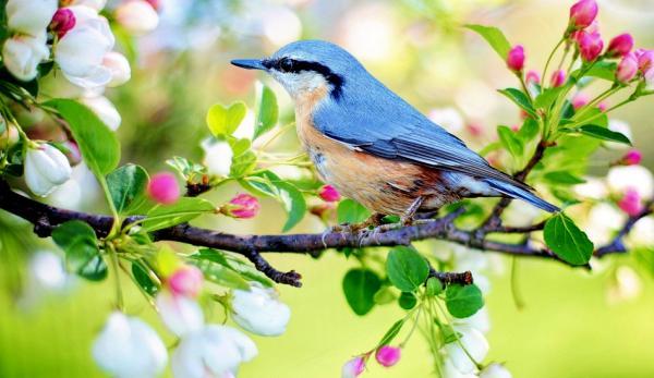 Le printemps est considéré comme le début d'un nouveau cycle de vie et de régénérescence. (Image :pixabay/CC0 1.0)