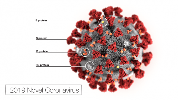 Le nouveau coronavirus 2019. (Image : CDC / Alissa Eckert, MS / Dan Higgins, MAM / Domaine public)
