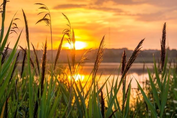 Le texte enseigne à  vivre en harmonie avec les saisons pour éviter les maladies, ainsi qu'à traiter les déséquilibres. (Image :pixabay/CC0 1.0)