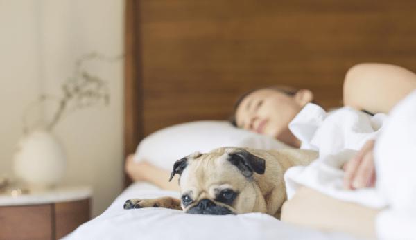 La Médecine Traditionnelle Chinoise (MTC) offre une explication alternative à l'insomnie et aux autres troubles du sommeil. (Image: /Pexels/CC0 1.0)