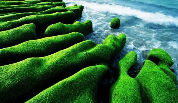 Le récif vert de Laomei (老梅綠石槽). (Image : North Coast & Guanyinshan National Scenic Area Administration, Tourism Bureau)