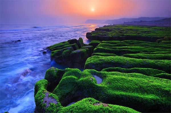 Ces récifs semblent être recouverts d'un tapis vert (Image : North Coast & Guanyinshan National Scenic Area Administration, Tourism Bureau, Taiwan)