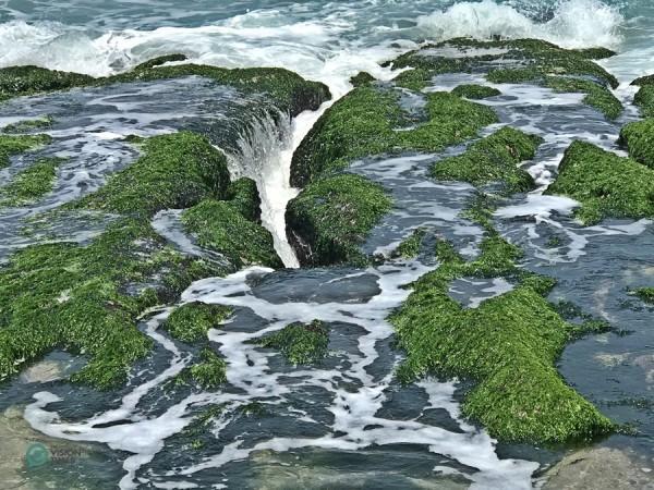 Chaque année, au nord-est, pendant la mousson, des algues vertes prolifèrent à la surface des récifs. (Image : Julia Fu / Vision Times)