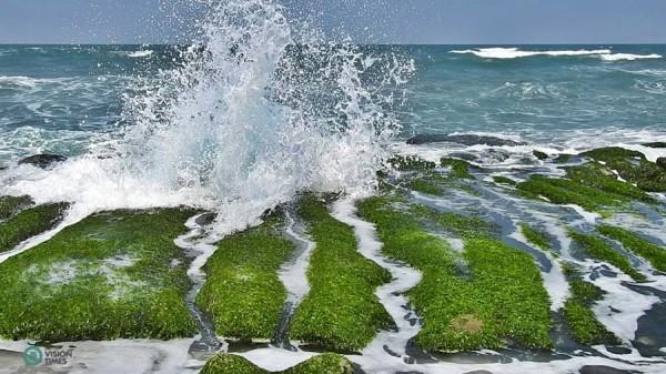 Les récifs sont recouverts de différentes sortes d'algues de février à mai. (Image : Billy Shyu / Vision Times)