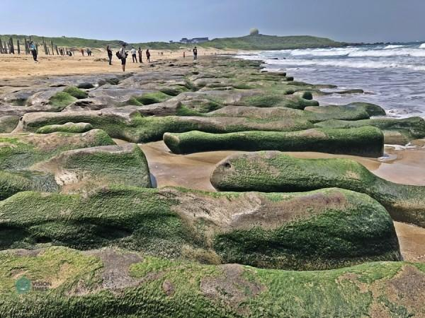 Au fur et à mesure que le temps se réchauffe, les algues disparaissent progressivement avec l'exposition au soleil. (Image : Billy Shyu / Vision Times)