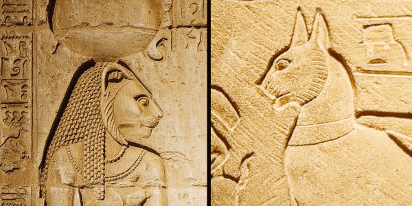 Le chef perse savait que les Égyptiens considéraient les chats comme sacrés, alors il en emmena des centaines sur le champ de bataille. (Image : Capture d'écran / YouTube)