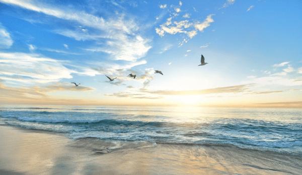 Immergez-vous dans les sons de la nature grâce aux efforts d'un groupe d'experts en enregistrements sonores de la nature du monde entier. be. (Image : pixabay/CC0 1.0)