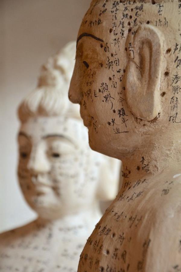 Le point de Feng Fu se trouve à la base du crâne, juste en dessous de l'arête inférieure de la calotte crânienne, au point le plus élevé du cou. (Image :Maxpixel /CC0 1.0)