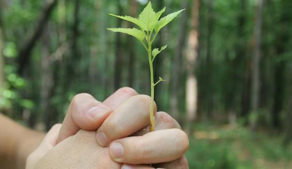 Des millions d'arbres sont plantés en Inde. (Image :Pixabay/CC0 1.0)