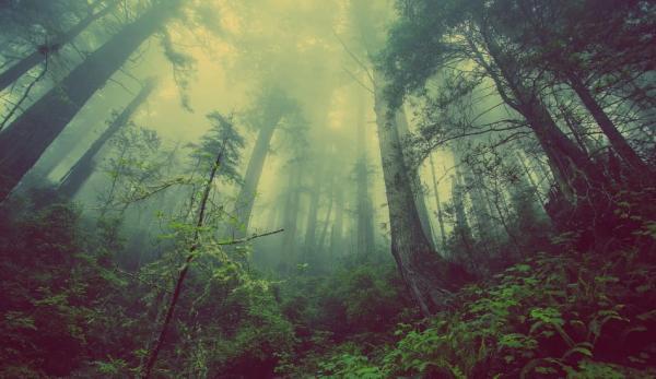 L'Inde a connu une croissance significative de sa surface forestière au cours de la dernière décennie. (Image :Pixabay/CC0 1.0)