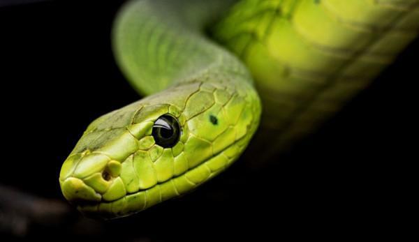 Après avoir bu dans un verre qui contenait apparemment un petit serpent à l'intérieur, il finit malade et alité, dans l'incapacité de faire quoi que ce soit. (Image :pixabay/CC0 1.0)
