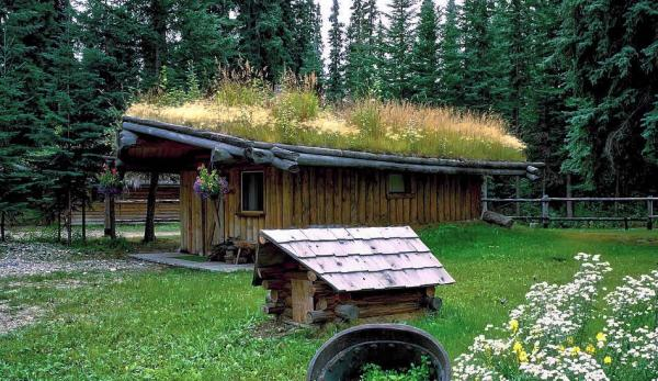 Un toit végétal, également appelé toit vert, se réfère essentiellement à un toit constitué d'une couche de substrat recouverte de végétation. (Image : pixabay/CC0 1.0)