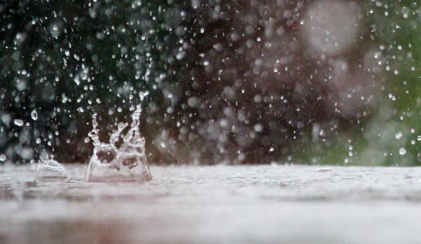 Les toits végétaux peuvent limiter le ruissellement des eaux de pluie. (Image :pixabay/CC0 1.0)
