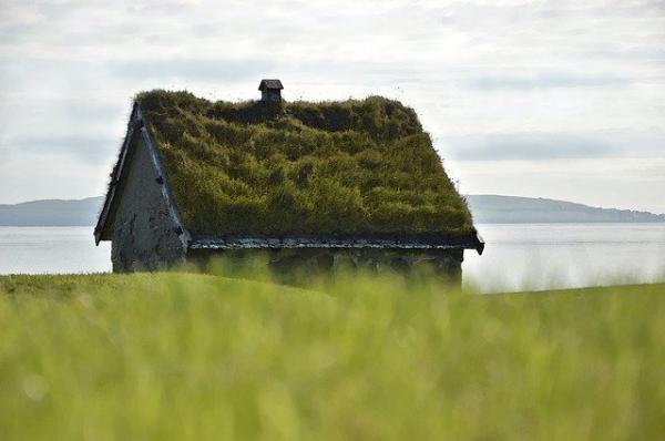 Un toit végétalisé permet d'améliorer la qualité de l'air environnant immédiat. (Image : Peggy Choucair/Pixabay)