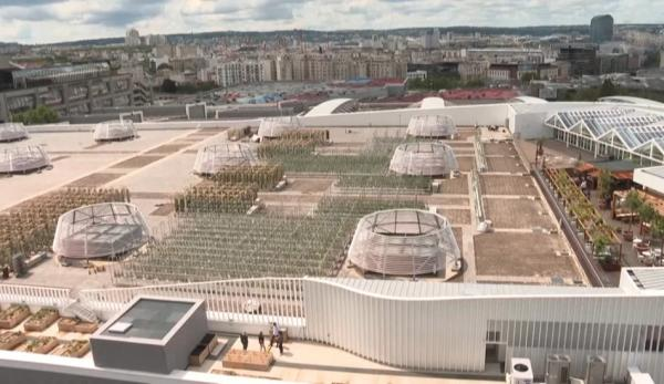 La ferme urbaine aménagée sur un toit de Paris est l'une des plus grandes au monde. (Image : Capture d'écran /YouTube)
