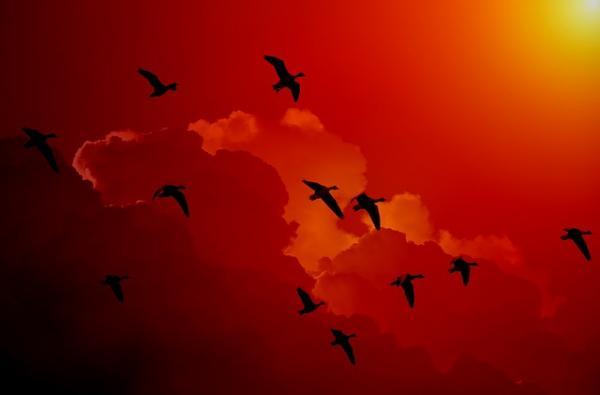 Se déplaçant surtout la nuit, les oiseaux migrateurs se laissent guider par la lune et les étoiles. (Image :Gerd Altmann/Pixabay)