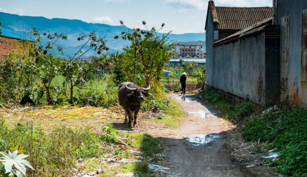 En Chine, le gouvernement est propriétaire de toutes les terres agricoles, tandis que les agriculteurs ne disposent que de droits contractuels pour travailler la terre. (Image :Bryon Lippincott/flickr /CC BY-ND 2.0)