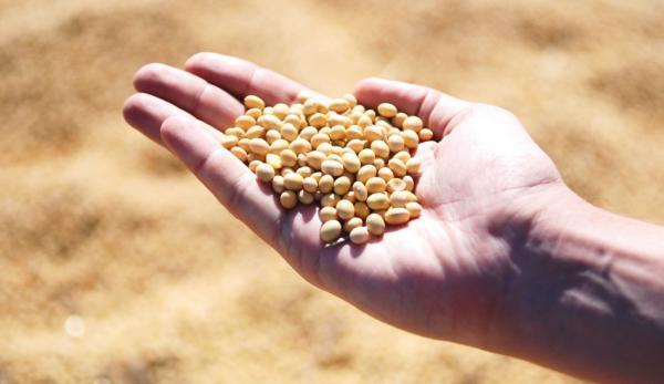 Le prix du soja a augmenté de 30 % et celui du maïs de 20 %. (Image :pixabay/CC0 1.0)