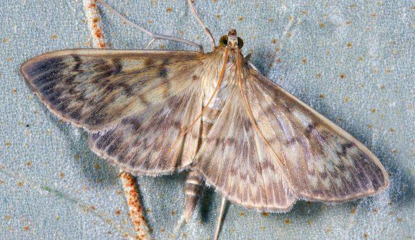 On doit à L'informaticienne américaine Grace Hopper,  l'invention du terme «débogage », après qu'elle eut retiré un insecte qui avait causé une panne dans l'ordinateur. (Image :pixabay/CC0 1.0)
