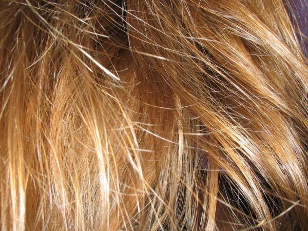 La perte de cheveux signifie un déséquilibre dans le corps et se caractérise par cinq manifestations. (Image : freeimages/CC0 1.0)
