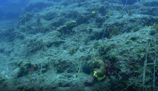 Le chalutage balaie les fonds marins, épuisant les ressources. (Image : Capture d'écran / YouTube)