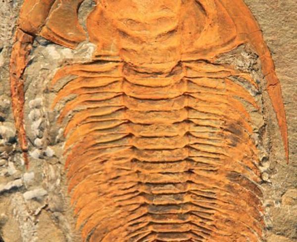 Trilobite : une créature disparue il y a 252 millions d'années