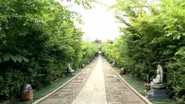 Grâce à la méthode Miyawaki, les forêts peuvent croître 10 fois plus vite que la moyenne. (Image : Capture d'écran / YouTube)