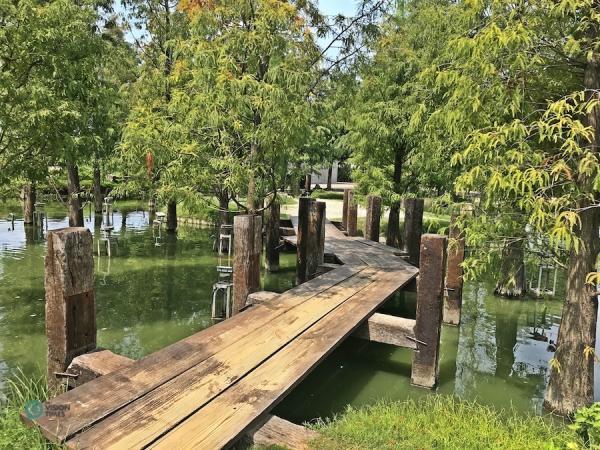 Il y a de nombreux cyprès chauves dans les étangs du musée de la forêt de bois d'agar de ChengLin. (Image : Billy Shyu / Vision Times)