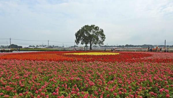 La Mer de fleurs de Xinshe 2020 et le Festival international de tapis de fleurs de Taichung ont attiré près de 2 millions de visiteurs. (Image : Billy Shyu / Vision Times)
