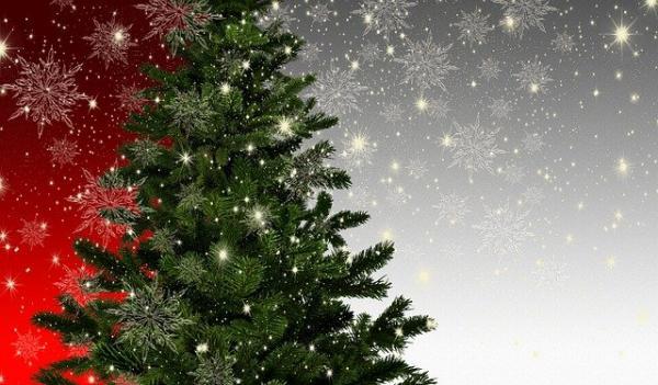 L'origine de l'arbre de Noël est attribuée à un rite païen datant de l'antiquité. Au moment du solstice d'hiver un arbre symbole de vie éternelle était honoré. (Image :Gerd Altmann/Pixabay)