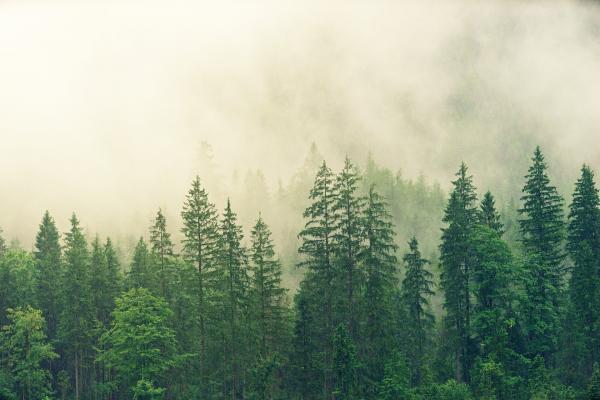 Les arbres d'une région peuvent communiquer entre eux. (Image :jplenio/Pixabay)